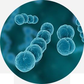 면역력강화