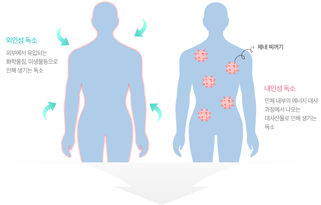 외인성독서는 외부에서 유입되는 화학물질, 미생물등으로 인해 생기는 독소이며 내인성 독소는 인체 내부의 에너지 대사 과정에서 나오는 대사산물로 인해 생기는 독소
