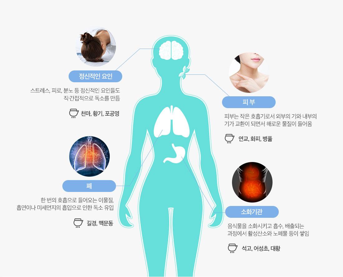 정신적인요인,피부,폐,소화기관