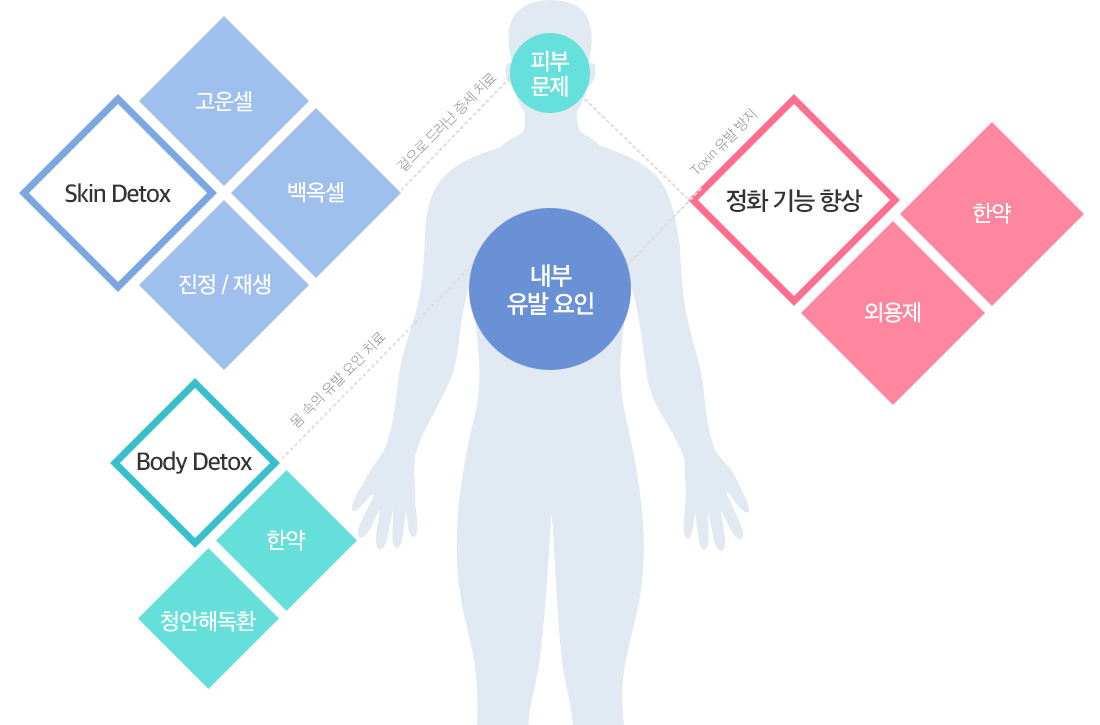 skin detox, body detox, 정화기능향상